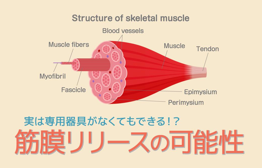 筋膜の画像