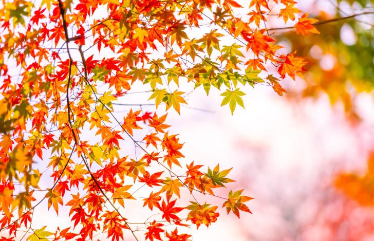 色づいた紅葉の木