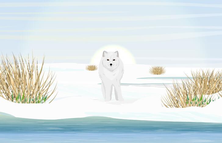 雪景色にたたずむ白いキツネ