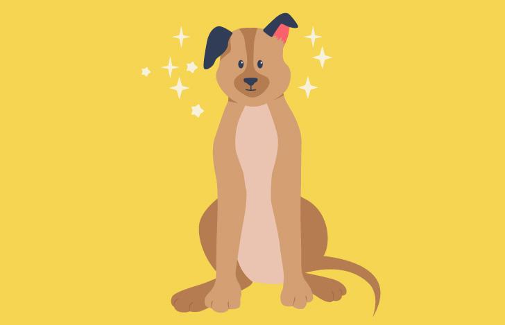 キラキラとした純粋な眼差しの犬